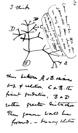 320px-Darwin_tree
