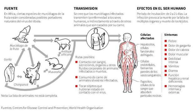 ebola-contagio-síntomas