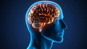 neuroimagenes.gifa