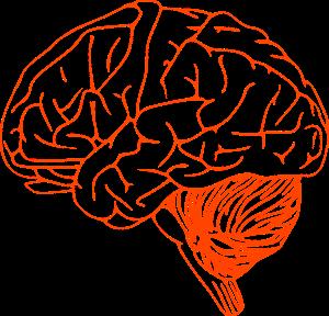 brain-305774_1280
