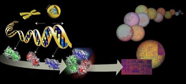 genoma 2