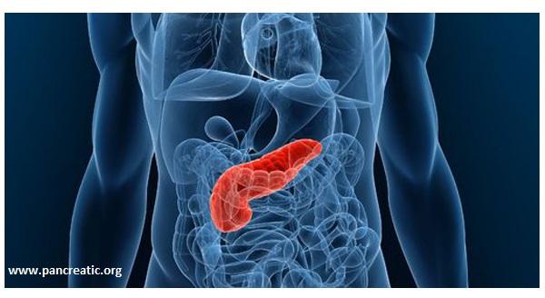 pancreatic org