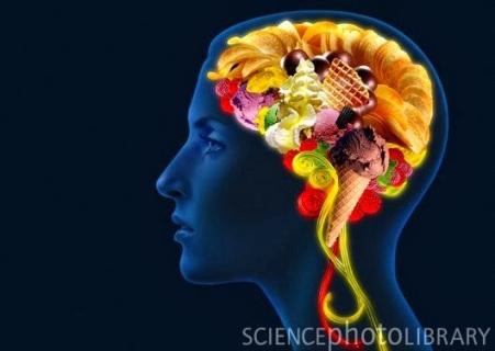 cerebro-y-azúcar