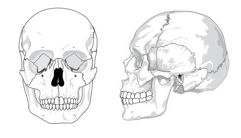 skull-41553_1280