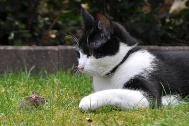 cat y raton