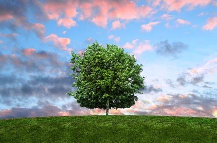 tree-895935_640