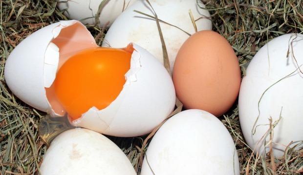 egg-1268240_1280