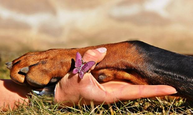 dog-paw-1102125_1280